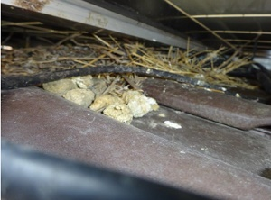 太陽光発電パネルの下に鳥が巣を作っている